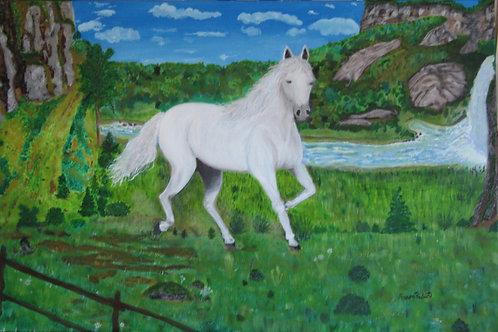 Cheval blanc dans les prés 36X24