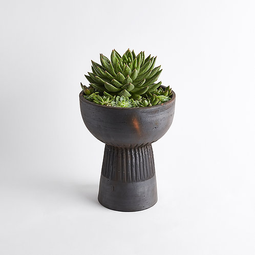 The Succulent Urn