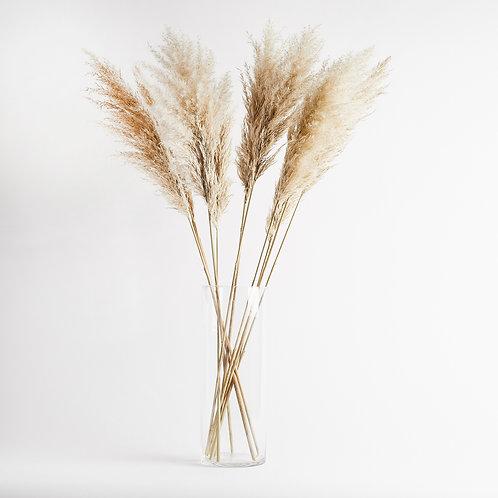 Pampas Grass 120cm (5 Stems)