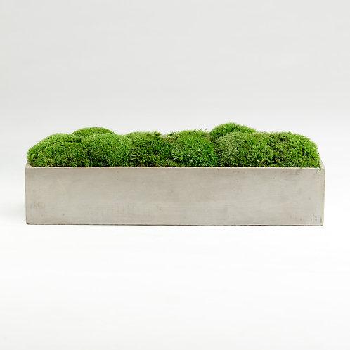 Moss Bowl Béton Brut