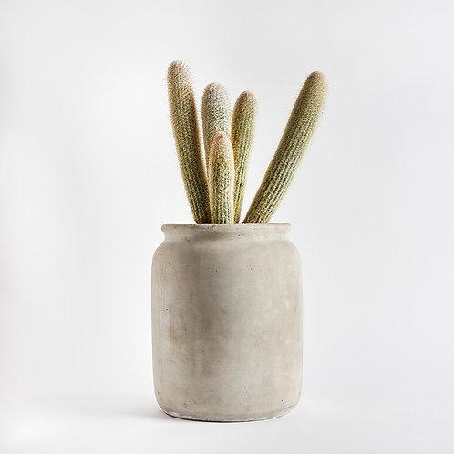 The Concrete Cactus