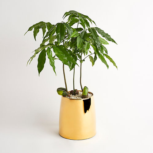 Chestnut Brass