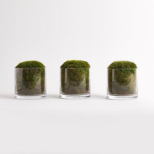 Moss Ball Trio