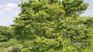 樹木図鑑#002 (4K/2K)