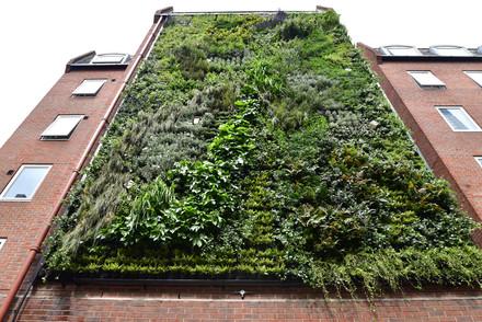 London Wall Living wall.jpg