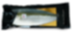 Hiramasa yellowtail kingfish