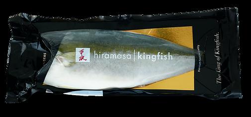 Hiramasa yellowtail kingfish