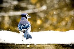 Bird Watching - all seasons