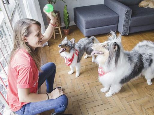 Especialistas falam sobre tipos de brincadeiras que auxiliam no bem-estar de cães e gatos em casa