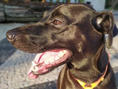 Dia Nacional dos Animais: conheça cinco fatos sobre os pets e os benefícios da convivência diária