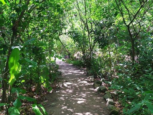 Área verde atrás do Rio Sul expõe sucesso de replantio organizado por associação de moradores