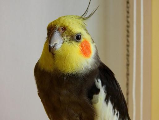 Aves em casa: conheça 11 dicas para cuidar bem desses pets