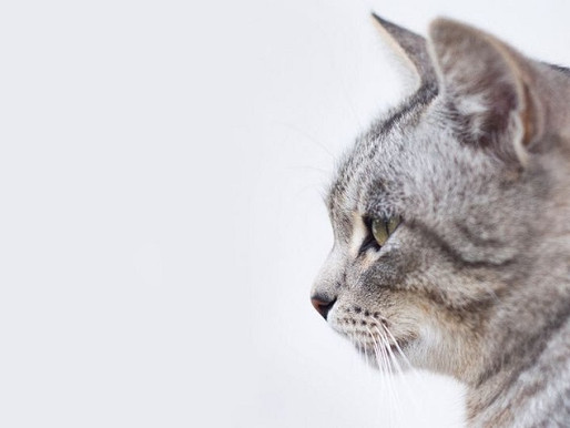 Veja como decifrar o comportamento do seu gato