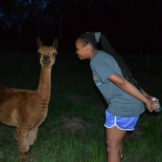 Meeting Alpacas at Barn at Gravity Hill .jpg