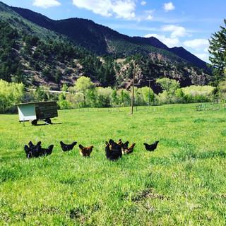 Mobile & Hens.jpg