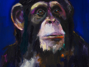 Schimpanse Blau