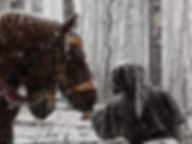 Snow horses.jpg