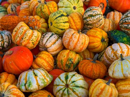 5 Must-Try Pumpkin Recipes