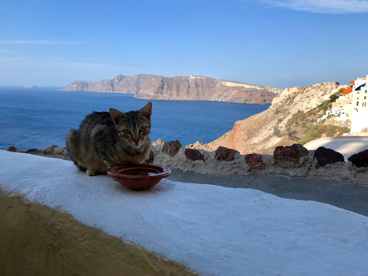 Feeding strays on Santorini, Greece