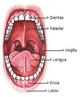 dentista en trujillo, odontologo en trujillo, dental en trujillo, dentista trujillo, odontologo trujillo, dental trujillo