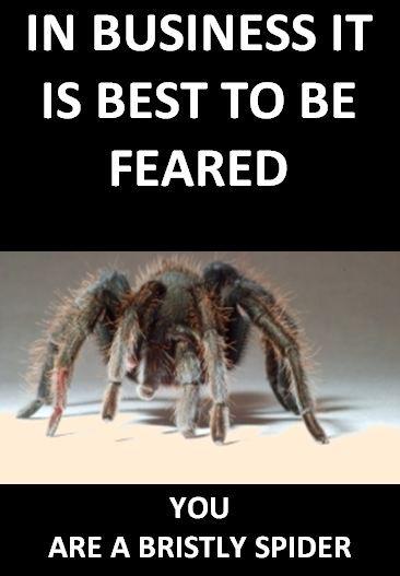bristly-spider1.jpg