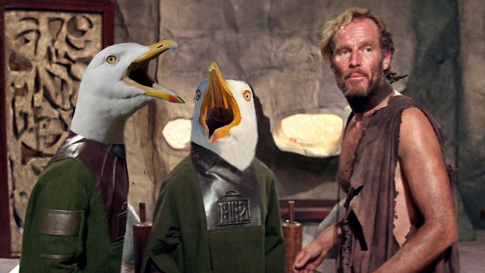 gulls-3-1024x576.jpg
