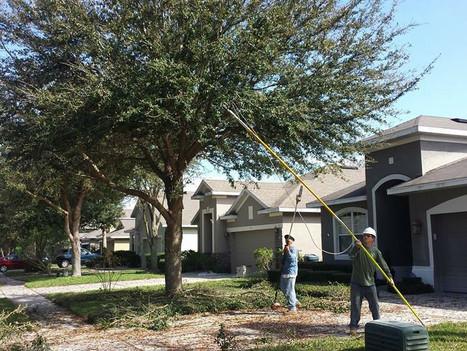optimum tree service tree trimming (1).j