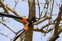 optimum tree service pruning (1).jpg