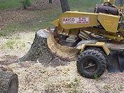 optimum tree service stump removal (2).j