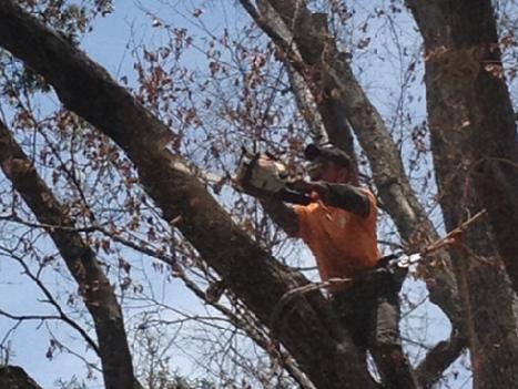 optimum tree service tree trimming (1).p