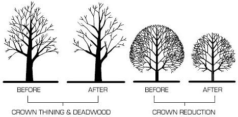 optimum tree service tree trimming trees