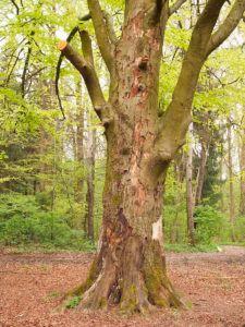 affordable  nashville Tree Service Scale