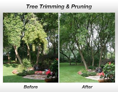 tree trimming powder springs ga, tree se