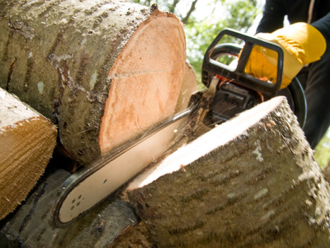optimum tree removal  (4).jpg