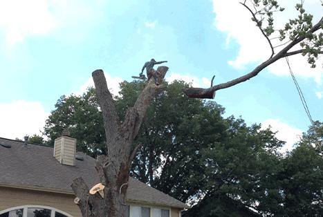 optimum tree removal  (2).png