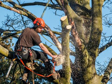 optimum tree removal  (3).jpg