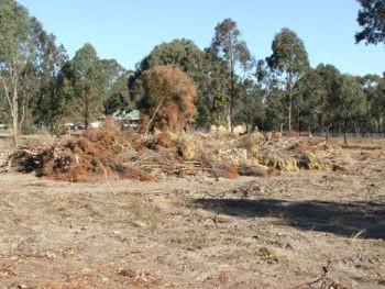 optimum tree service land and lot remova