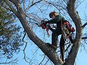 optimum tree service tree trimming (6).j