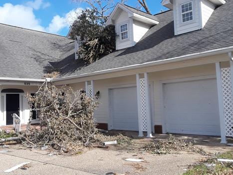 optimum tree service 24hr emergency tree