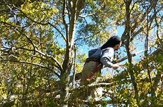 optimum tree service tree trimming (2).p