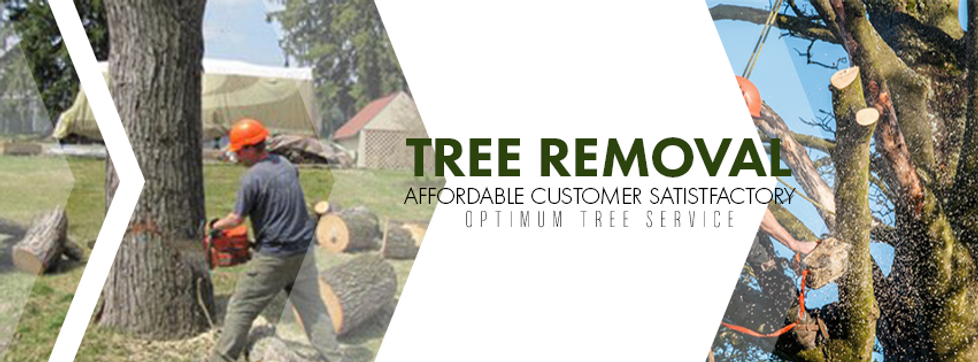 tree removal banner.png