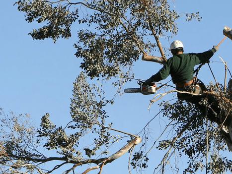 optimum tree removal  (1).png