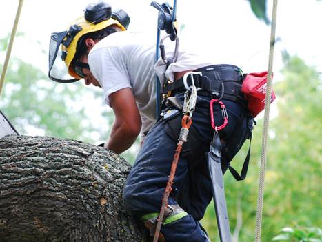 optimum tree removal  (5).jpg