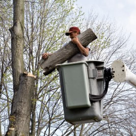 optimum tree service tree removal servic
