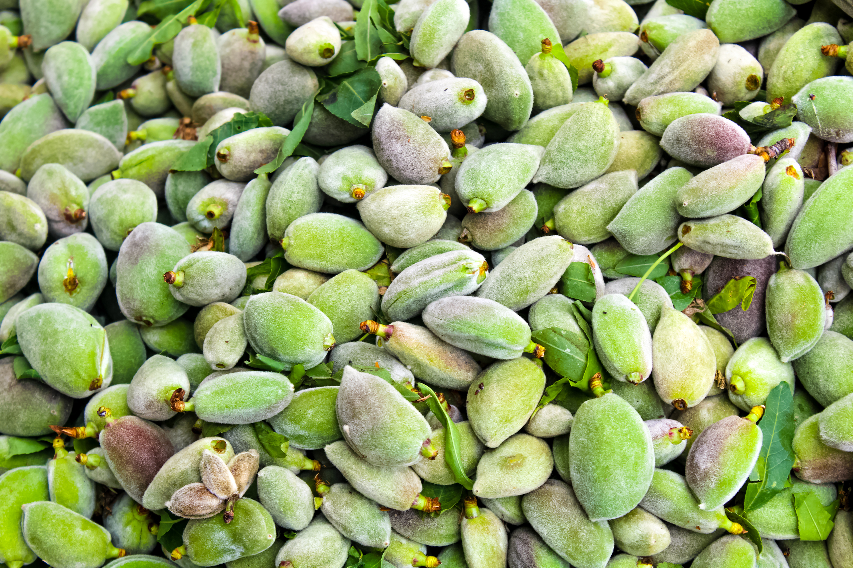 Green almonds background