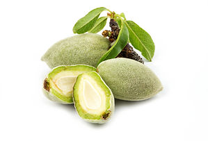 Fresh green almonds nuts isolated on whi