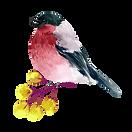 watercolour elements-02.png