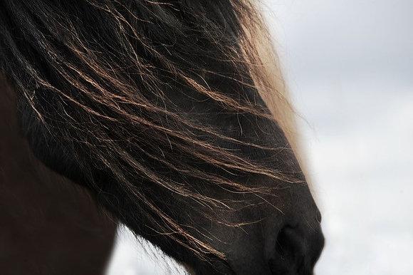 10. Gentle Breeze in Iceland AP