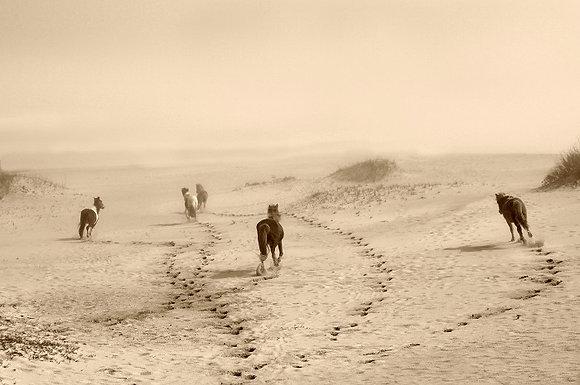 15. Whild Horses Running into the Fog - Assateague