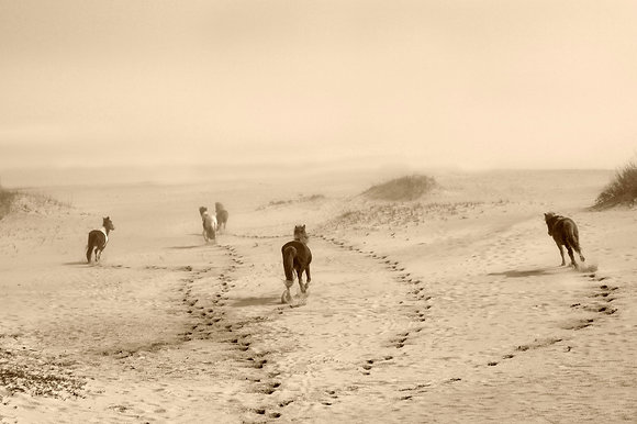 Wild Horses Running into the Fog - Assateague